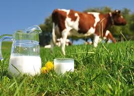 Leche de vaca es Salud